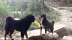 جنگ ونبرد حیوانات وحشی سگ سیاه