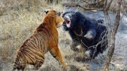 جنگ خونین و وحشیانه حیوانات