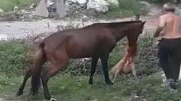 جنگ وحشیانه و خونین سگ و اسب