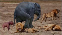 جنگ و نبرد حیوانات درنده – حیوانات وحشی