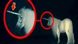 کشف پنج تا موجود تک شاخ در واقعیت +اسب تک شاخ واقعی !!!؟