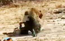حمله شیر به بابون ها – فیلم ترسناک شکار حیوانات