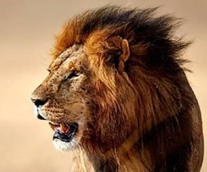 حمله حیوانات خشمگین به انسان