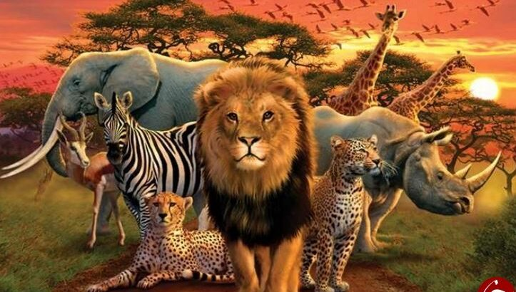 حیوانات بسیار شگفت انگیز در طبیعت