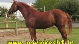 اموزش پرورش اسب