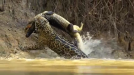 حمله حیوانات، پربازدیدترین کلیپ با ۲۰میلیون بیننده