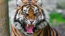 شکار و جنگ بین حیوانات