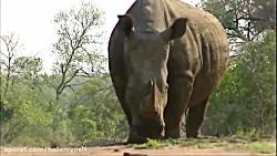 5 تا از بهترین فرارهای حیوانات از شکار شدن در حیات وحش