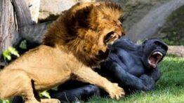 شکار حیوانات وحشی در حیات وحش